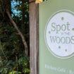 Spot in Woods